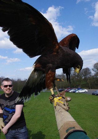 Falconry at Catton Hall