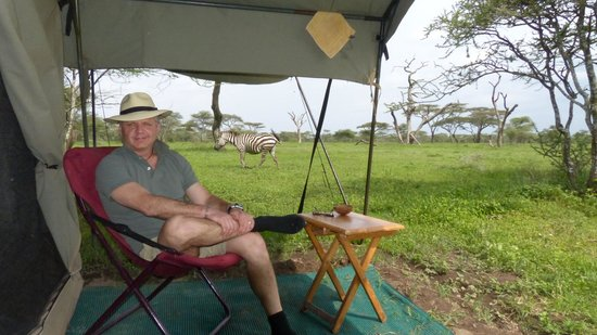 Ndutu Wilderness Camp: Zebra right by our tent