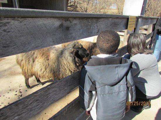 Kansas City Zoo : Farm area for kids