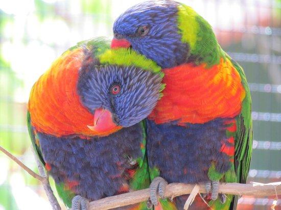 Kansas City Zoo : Bird enclosure is very colorful
