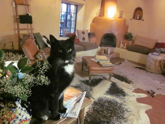 """Adobe and Pines Inn B&B : """"Nelson"""" resident kitty and greeter"""