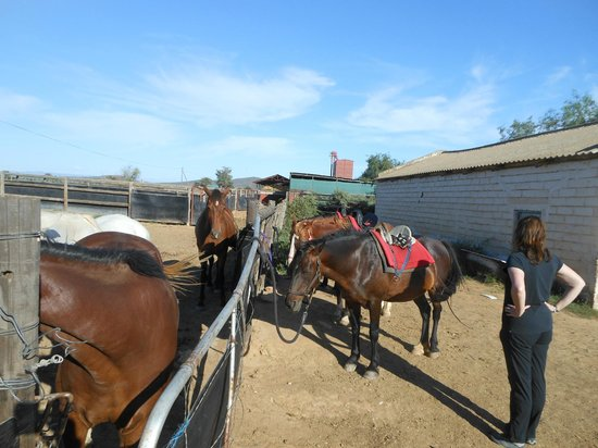 De Zeekoe Guest Farm : horse riding