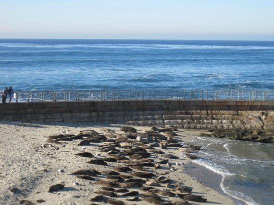 La Jolla Shores Park: SEAL BEACH
