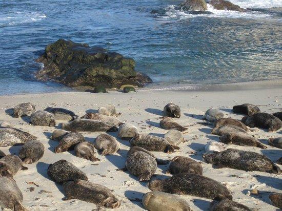 La Jolla Shores Park: SEAL BEACH