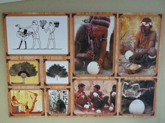 Safari Ostrich Show Farm : poster