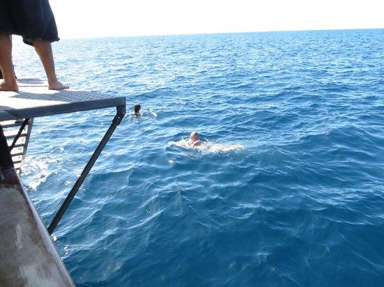 Excursiones de avistamiento de ballenas Flipper Uno: Swim to cool down!