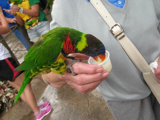 Jardines Busch: Feeding the parakeets...