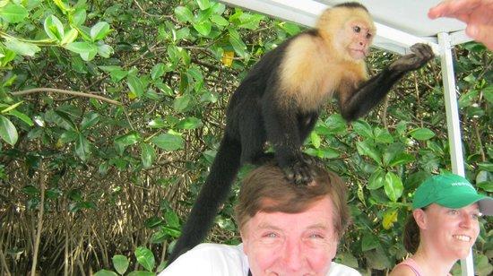 Piko Travel: Monkey Tour