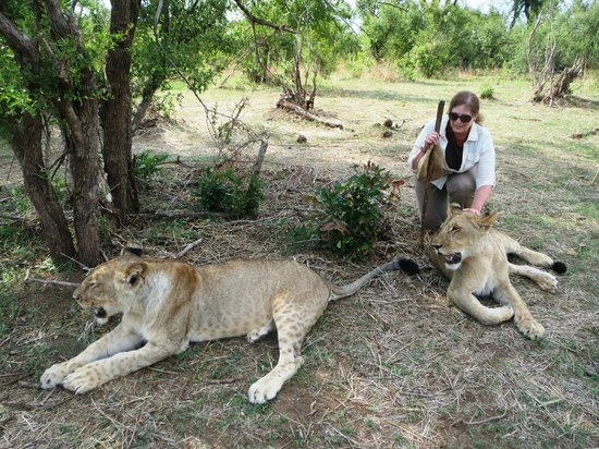 Walking with Lions at Victoria Falls : Taking a Break from Walking