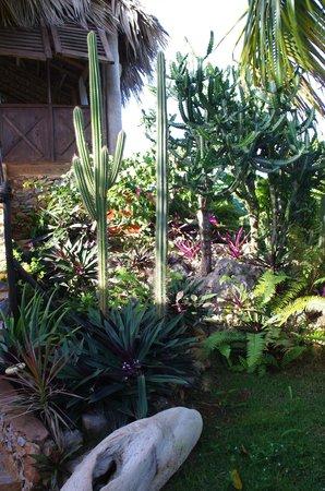 La Loma-Cita: jardin