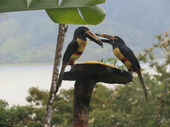 Villa Decary: Toucans at feeder