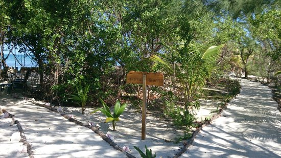 Thatch Caye Resort: A junction in the island