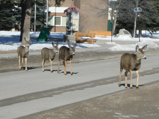 Chateau Jasper: Beware - deer crossing