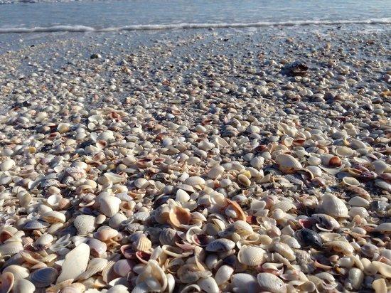 Gulfside City Park Beach: Crazy amount of shells!
