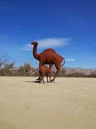 Galleta Meadows : camel
