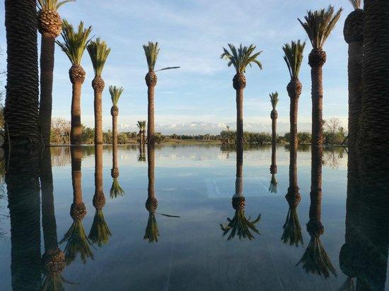 Fairmont Royal Palm Marrakech : de la piscine