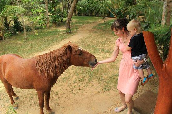 Green Garden Cabanas & Resort: по территории ходят пони