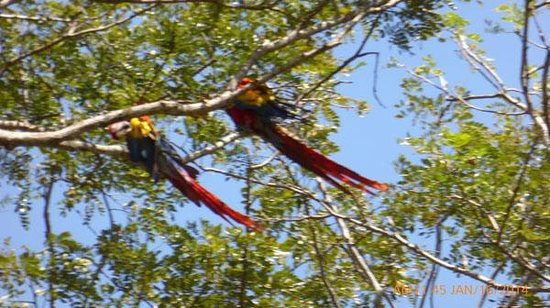 Ricky Ricardo Tours and Travels: ON THE WAY TO LUNCH RICKY FINDS SOME MACAWS