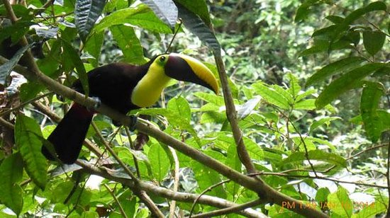 Ricky Ricardo Tours and Travels: TUCAN ON THE AERIAL TRAM TOUR IN THE AFTERNOON