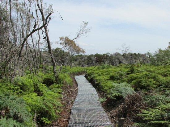 Sydney Coast Walks - Day Walks : North Head Sanctuary