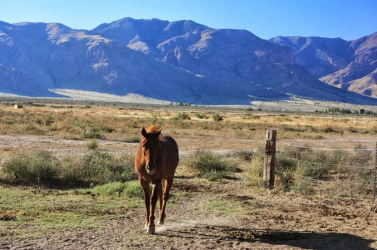 Hideout Ranch : A curious horse!