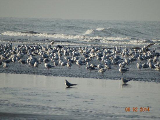 Whistling Palm Beach Resort: Seagulls