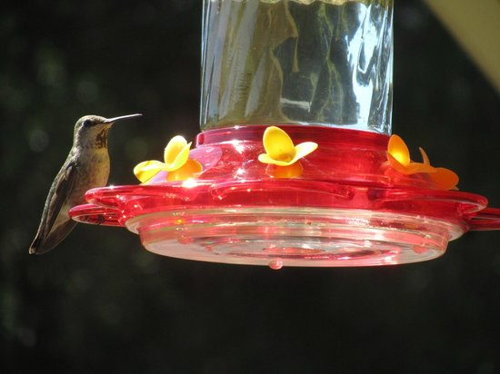 Red Tail Ranch: hummingbird <3