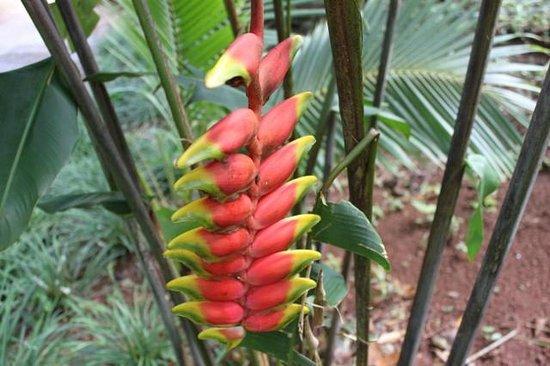 Lakaz Chamarel Exclusive Lodge: Fleur Lakaz Chamarel
