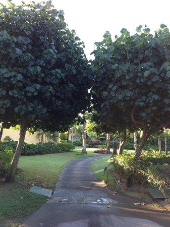 The St. Regis Punta Mita Resort : beautiful grounds, hand watered daily