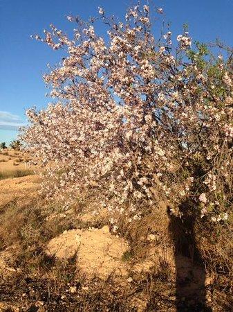 Coming Home - Las Terrazas de la Torre: Almond tree