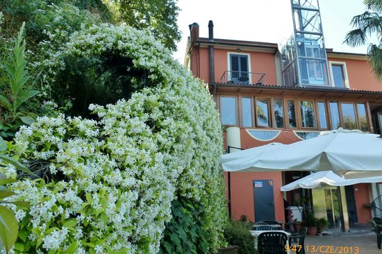Hotel Bellavista : Wśród zieleni