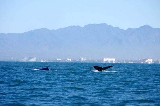 Crown Paradise Club Puerto Vallarta: From our whale watching tour.  Would highly recommend!