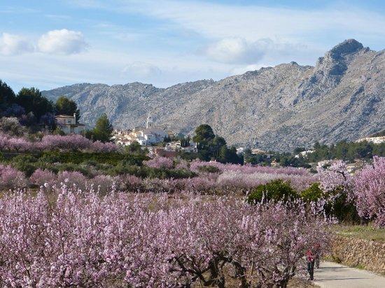 Casa Carrascal: Almond Blossom, Parcent, Jalon Valley