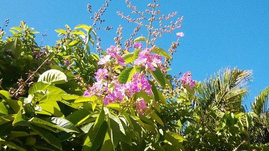Lalati Resort & Spa: flora
