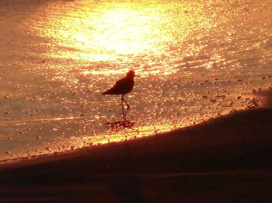 Dukes Malibu: Sunset