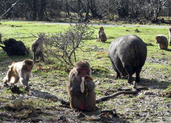 Planète Sauvage: Le repas des macaques
