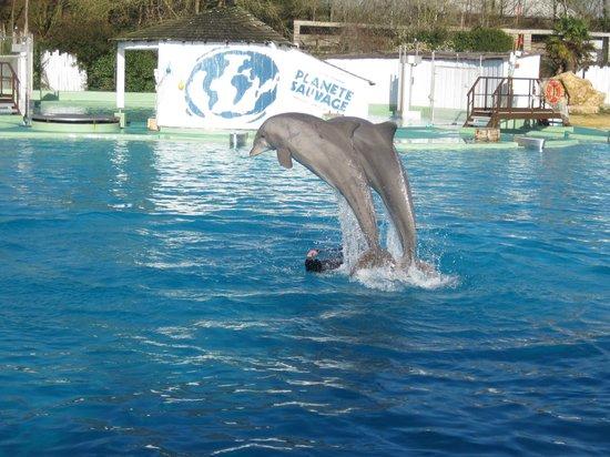 Planète Sauvage: L'entraînement des dauphins