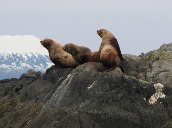 Aquatic Alaska Adventures: A few large Stellar Sea Lions