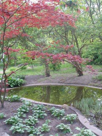 Poznan Botanical Gardens: drzewo