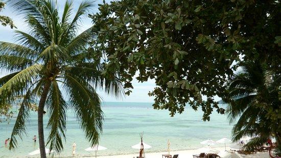 Muang Samui Spa Resort: Praia