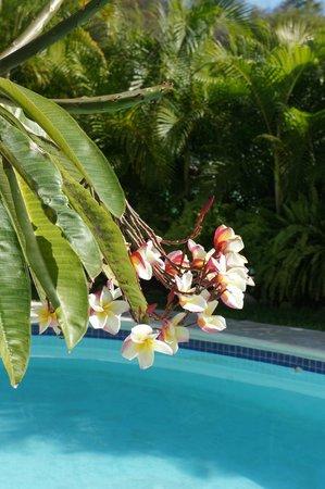 Agua Azul La Villa: Swimming pool