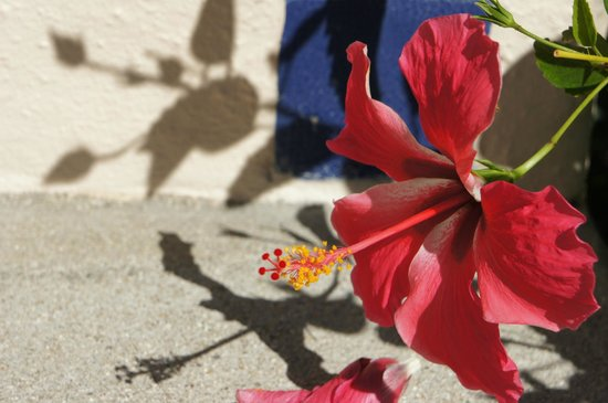 Agua Azul La Villa: Flowers in the garden