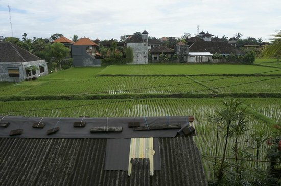 Gerhana Sari 2 Bungalows: View of rice fields from the balcony.