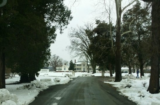 Belle Grove Plantation Bed and Breakfast: the entry drive