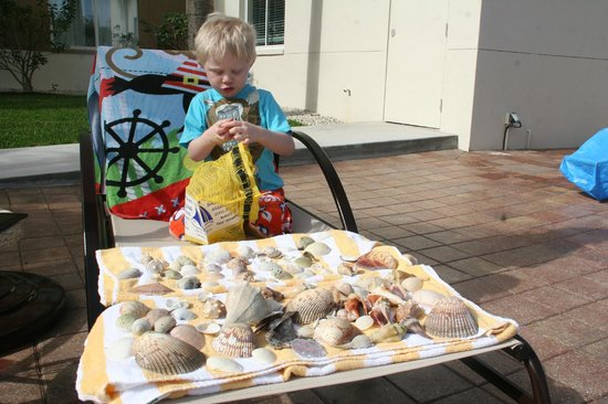 Off the Hook Adventures: Sorting through the shells we collected