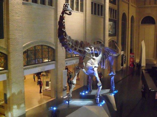 Real Museo de Ontario: Dinosaur