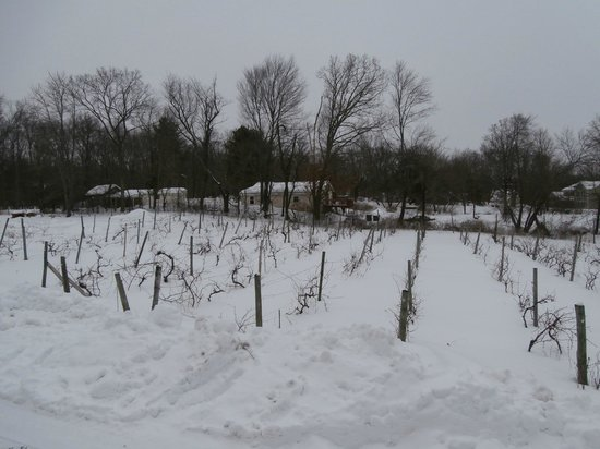 Pine Bush, NY: vineyard