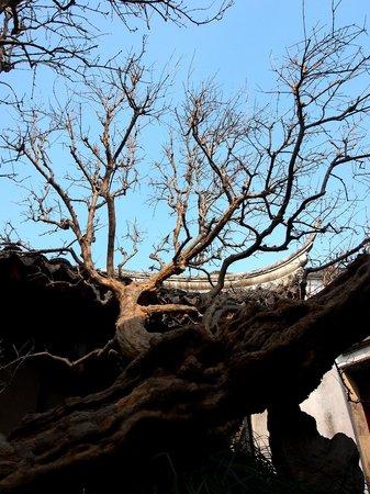 Master-of-Nets Garden : Tree