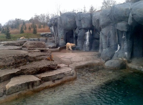 Toronto Zoo: Polar Bear