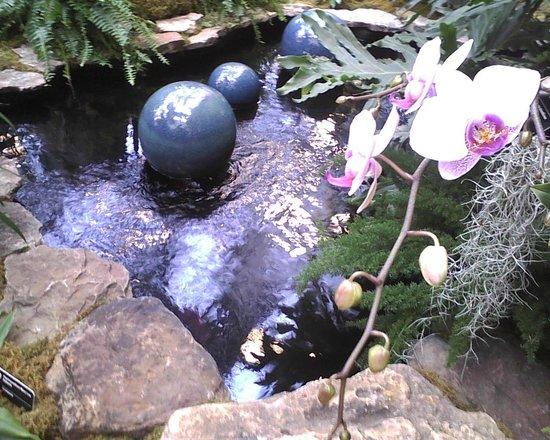 Missouri Botanical Garden : orchid show 2014